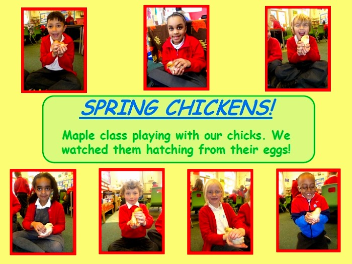 Easter Chicks Photo